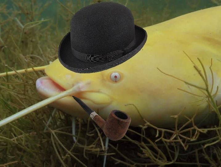 Sticker risitas silure gentleman pipe poisson albinos
