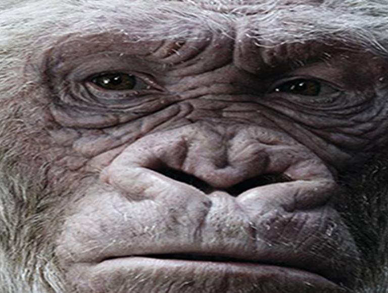 Sticker other singe la planete des singes gorille albinos