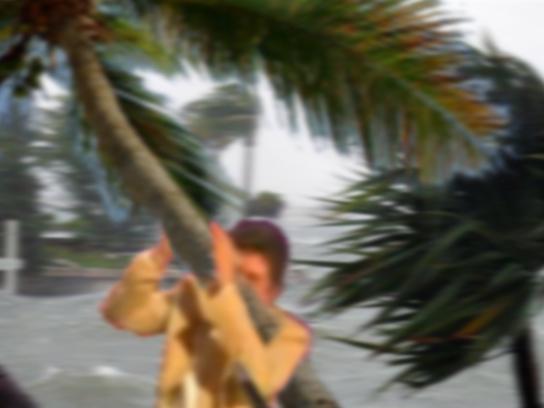 Sticker jesus ouragan issou accroche palmier arbre vent fort