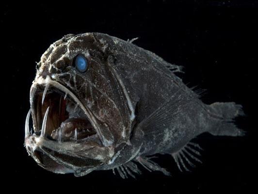 Sticker other poisson mer ocean abysses fonds marins obscurite predateur