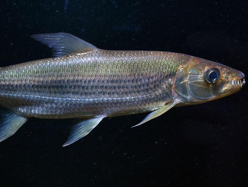 Sticker other poisson goliath faim mer ocean