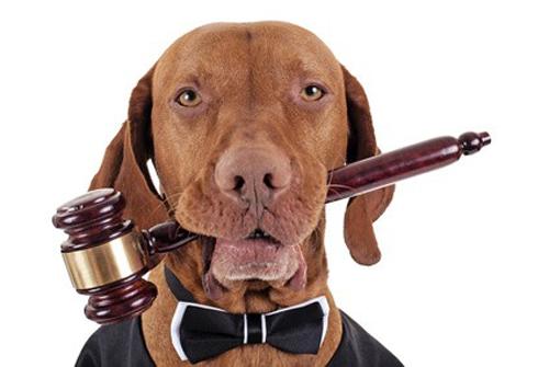 Sticker risitas chien tribunal juge