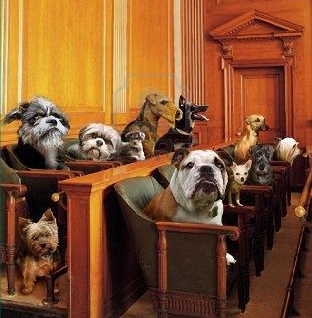 Sticker risitas chiens jury 3