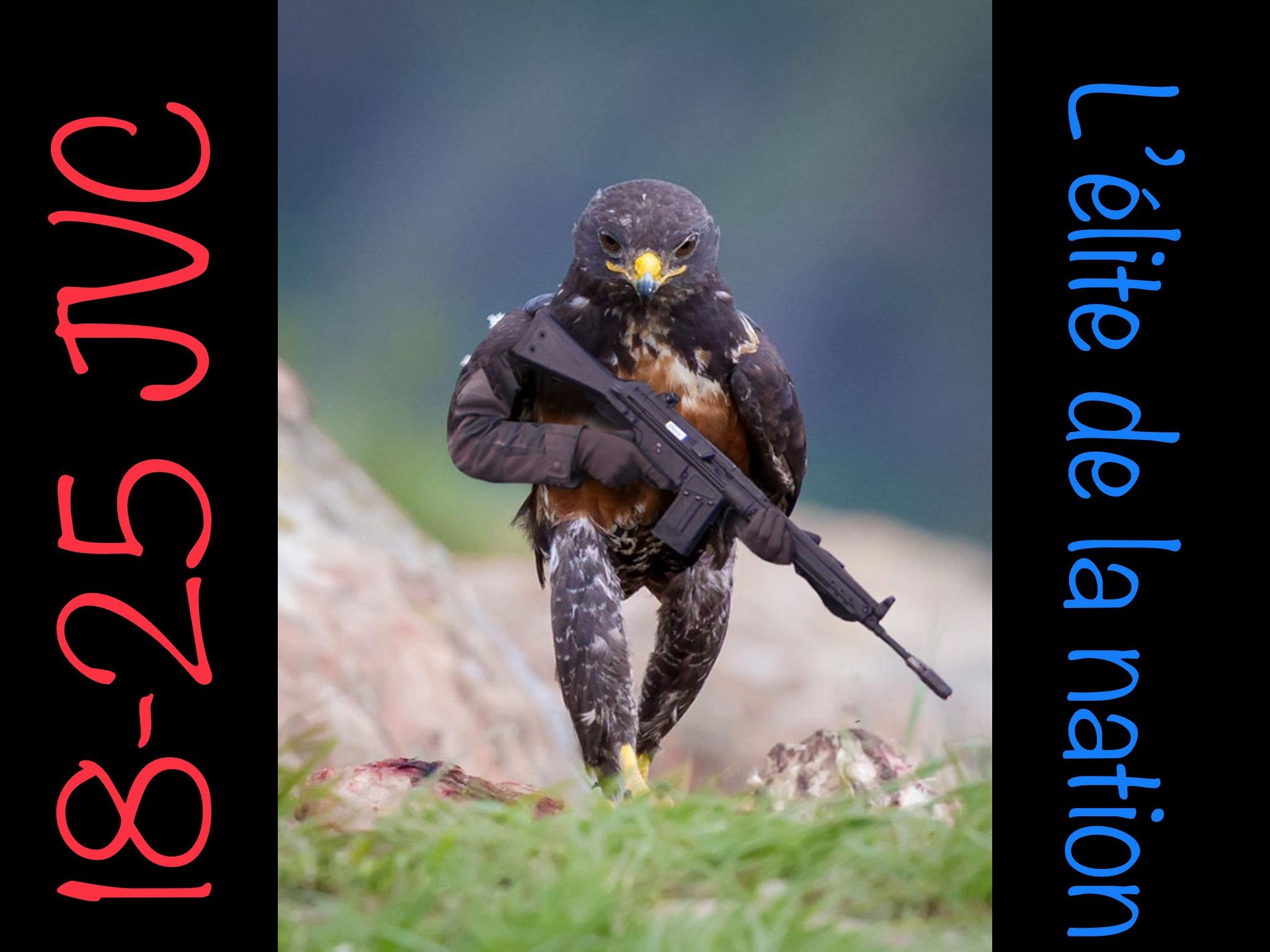 Sticker faucon elite de la nation jvc commandao 18 25