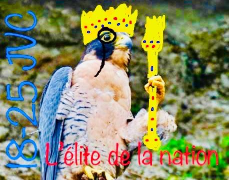 Sticker faucon elite de la nation roi couronne jvc 18 25