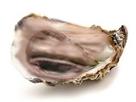 Sticker risitas huitre eussou fruits de mer gluand