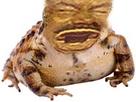 Sticker risitas eussou crapaud vase grenouille moche horrible
