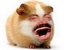 Sticker risitas cochon dinde cobaye yorarien