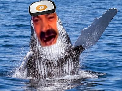 Sticker risitas trader baleine riche crypto monnaie argent cresus rire salut classe cool oklm dix mille 10000