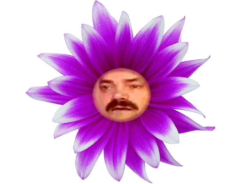 Sticker risitas fleur drole ridicule plante nature herbe couleur rose