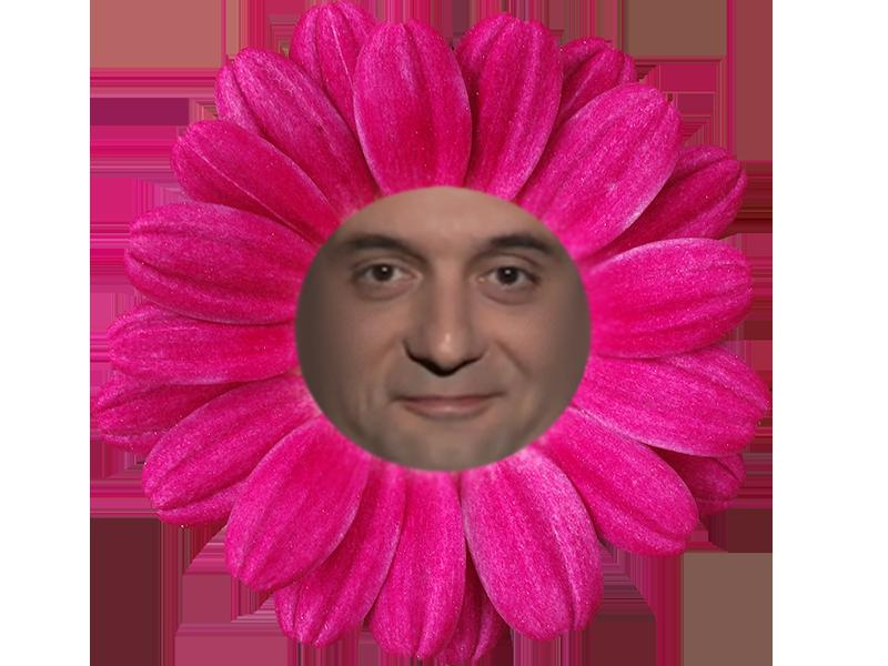 Sticker politic phillipot fn patriotes philiprout sourire impertinant fleur drole ridicule plante nature herbe couleur rose