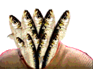 Sticker risitas bizarre sardine poisson