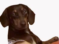 Sticker other chien cool oklm calme tranquille a table a laise ecoute attentif ecoutons regarde doubt pitie dog