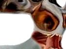 Sticker jvc risitas creepy bizarre omg alien bizarre issou monstre