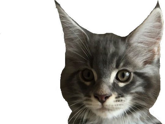Sticker other chat mignon roux gris chaton issou poil
