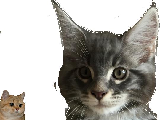 Sticker other chat issou roux gris miaou poil