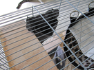 Aménagement pour la cage de mes deux monstres 1374245705-img-5306