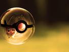 Un post à images généralistes 1384884775-1381173143-pokemon-wallpaper-hd