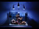Nano Reef 30l 1410092447-dsc-0106