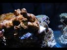 Nano Reef 30l 1410092598-dsc-0116