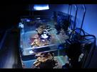Nano Reef 30l 1410092601-dsc-0113