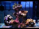 Nano Reef 30l 1410092654-mod-gros-p
