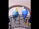Je vous présente mes amours lili et Nico  1416145151-image