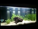 Des conseils pour quelques plantes de couleurs... 1420908084-1420825124640
