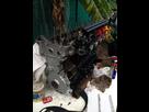Refection moteur S50B30 1431778358-img-0938