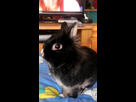 Association White Rabbit - Réhabilitation des lapins de laboratoire - Page 3 1441181289-4472-9