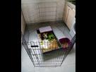 Cohabitation chien / lapins 1492461690-img-20160514-190026