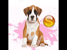 1539926086-boxer-f-apte-sd.png