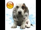 1541529683-basset-hound-m-sd.png