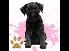 1541877594-black-border-terrier-f.png