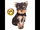 1541959940-york-chiot-goldy.png