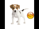 1542711793-jack-russell-chiot-sd.png