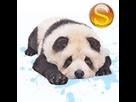 1542733661-panda-chow-m-apte-sd.png