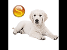 1543409208-golden-creme-pale-chiot-sd.png