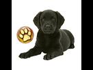1543409363-labrador-noir-chiot-goldy.png