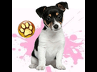 1543499267-jack-russell-f-apte-goldy.png