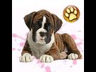 1543499510-boxer-bringe-f-apte-goldy.png