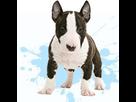 1543582459-kit-v1-bull-terrier-m-apte.png