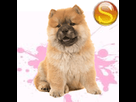 1544079602-chow2-f-apte-sd.png