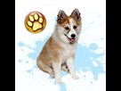 1545297751-lundehund-m-apte-goldy.png