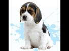 1545980746-beagle-m-apte.png
