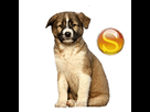 1546841755-aidi-chiot-sd.png