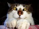 http://www.noelshack.com/2013-18-1367340259-humour-chat-coccinelle-72734.jpg
