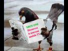 http://www.noelshack.com/2013-22-1369773512-pigeon-module.jpg