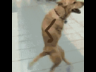https://image.noelshack.com/fichiers/2015/30/1437597866-1428612048-1428146302-doggy-style.gif