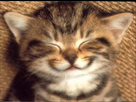 http://www.noelshack.com/2015-32-1438731093-158345-kddz14ug5k8bwwqfslt1mexb7rm8qd-47199-34064888-sourire-20de-20chat-h153958-l-h012558-l.jpg